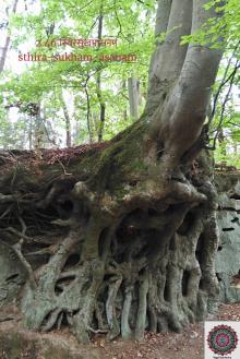 sthira sukha quote arbre