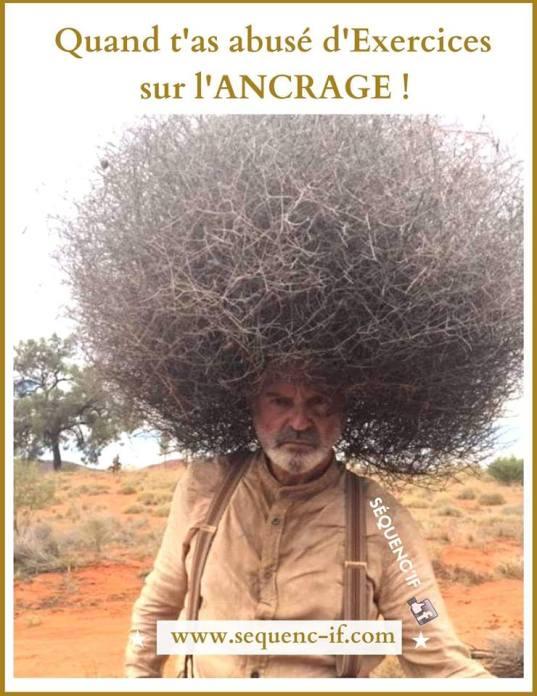 ancrage photo arbre drôle
